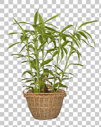 plant masked potted isolated alpha