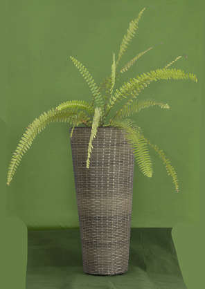 plant masked potted fern isolated alpha