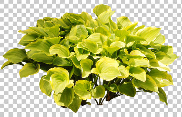 plant shrub leaves masked alpha
