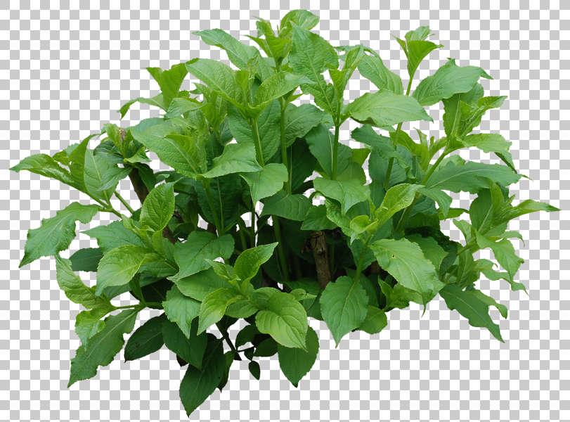 PlantsSingle0053 - Free Background Texture - plant shrub ...