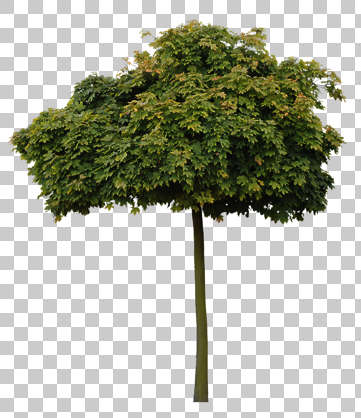 tree alpha masked