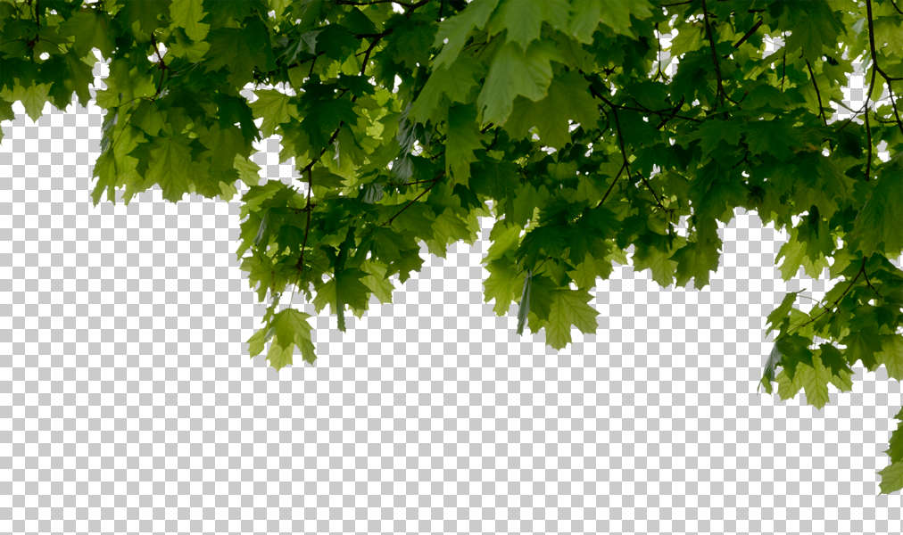 Trees0109 Free Background Texture Tree Alpha Masked