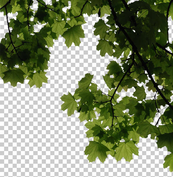 trees0115 - free background texture