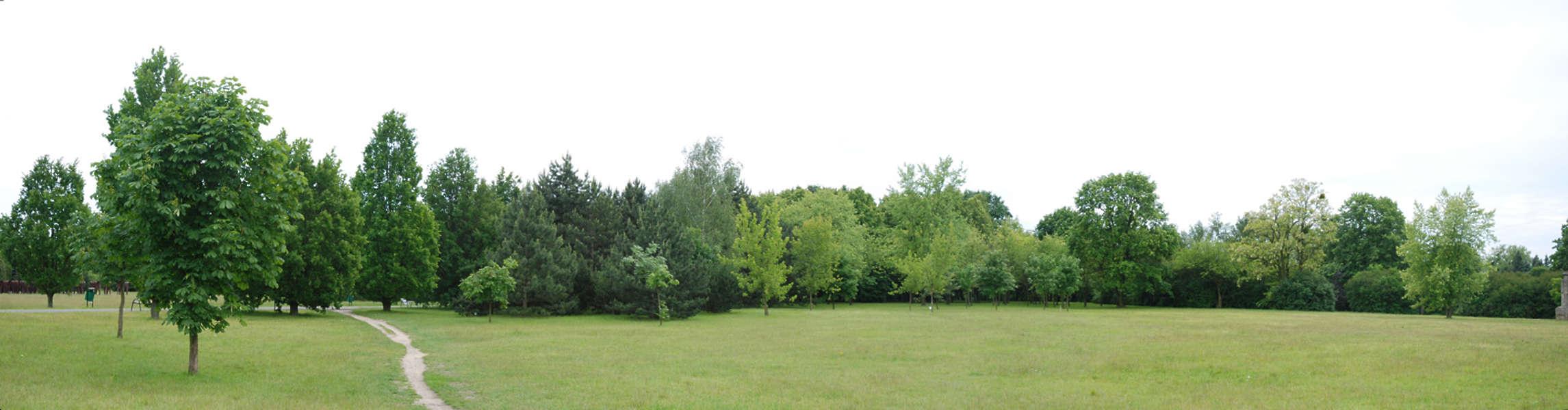 Trees0009 Free Background Texture Tree Trees Treeline
