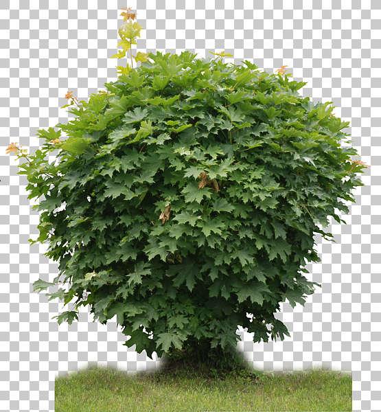 Trees0023 - Free Background Texture - plant foliage bush ...