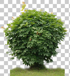 plant foliage bush shrub vegetation masked isolated alpha