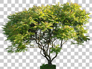 plant foliage tree leaves vegetation masked isolated alpha