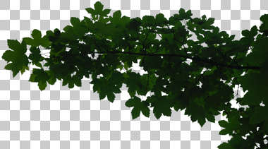 plant foliage branch tree leaves masked isolated alpha