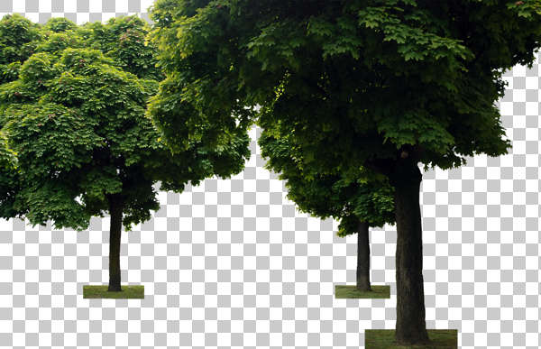 tree leaves alpha masked isolated