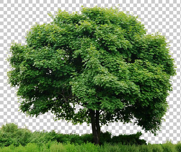 Trees0043 - Free Background Texture - tree leaves alpha ...