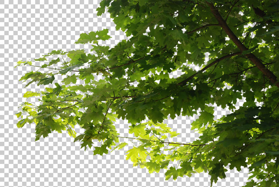 Trees0045 - Free Background Texture - leaves alpha masked ...