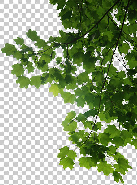 Trees0048 Free Background Texture Leaves Alpha Masked