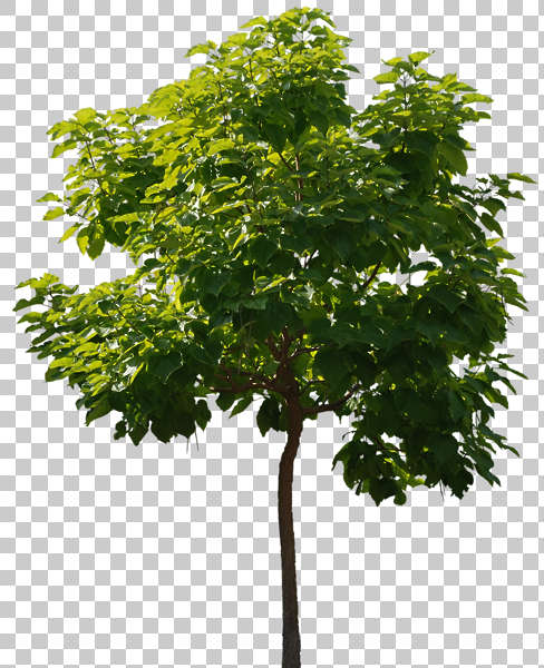 Trees0058 Free Background Texture Tree Leaves Alpha