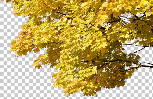 Trees0078 Free Background Texture Tree Leaves Alpha