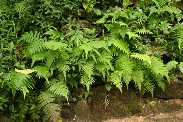 tropical forest rainforest foliage plant plants leaves fern ferns