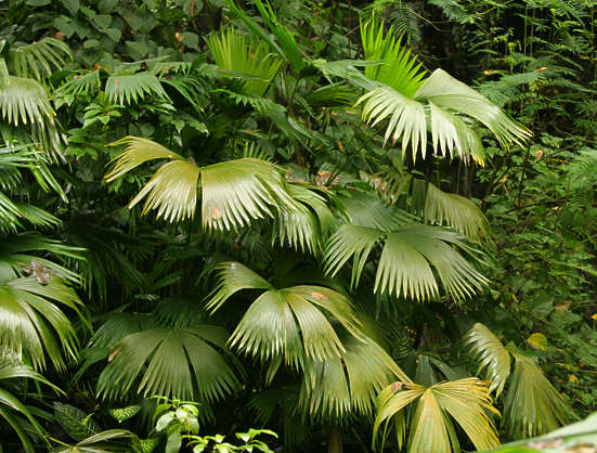 tropicalfoliage0011 - free background texture