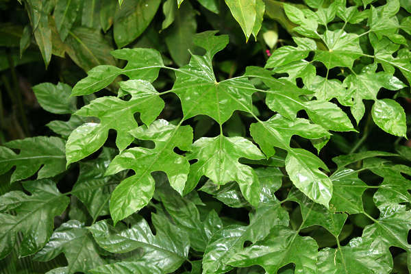 tropical forest rainforest foliage plant plants leaves