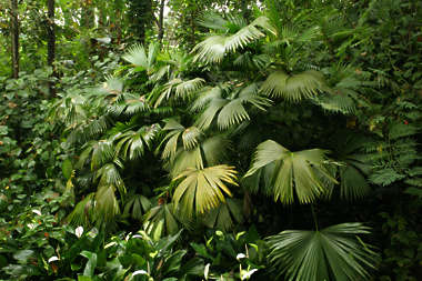 tropical foliage leaves leaf palm