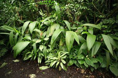 tropical foliage leaves leaf