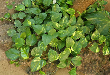 plant foliage tropical plants groundplant groundplants