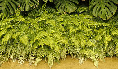 fern foliage tropical ferns leaf leaves