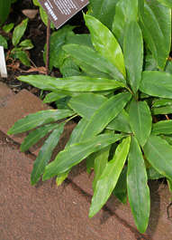 plant foliage tropical leaves