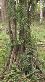 jungle tropical plant tree foliage