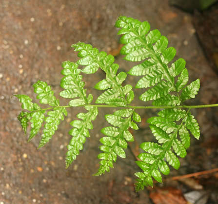 fern leaf plant tropical ferns leaves