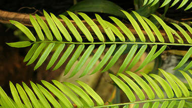 plant leaves tropical leaf