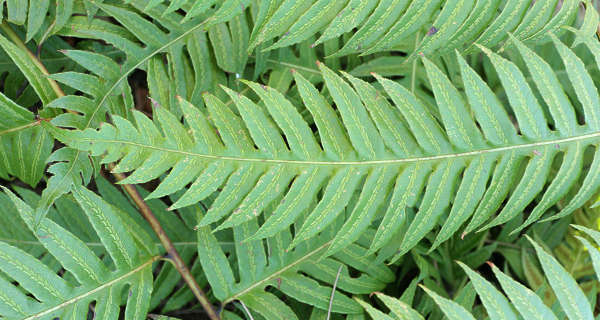 fern plant leaf tropical leaves