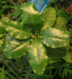 tropical leaf leaves plant