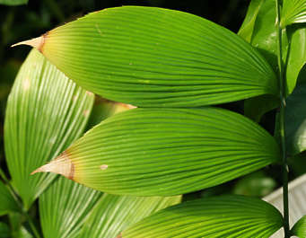 tropical leaf plant leaves