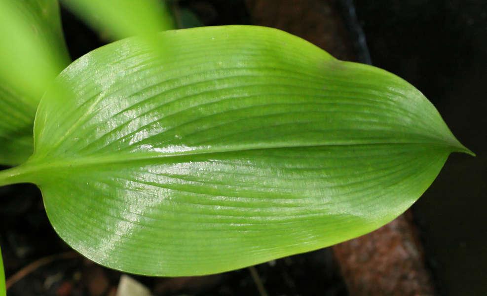 Leavestropical0249
