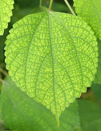 tropical leaf plant closeup