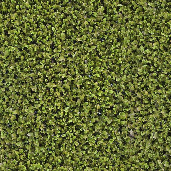 Waterplants0058 Free Background Texture Waterplants