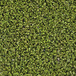 waterplants waterplant groundplant groundcover ground cover aerial