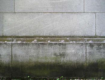 wall concrete moss gradient