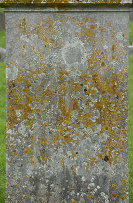 UK headstone tombstone grave mossy