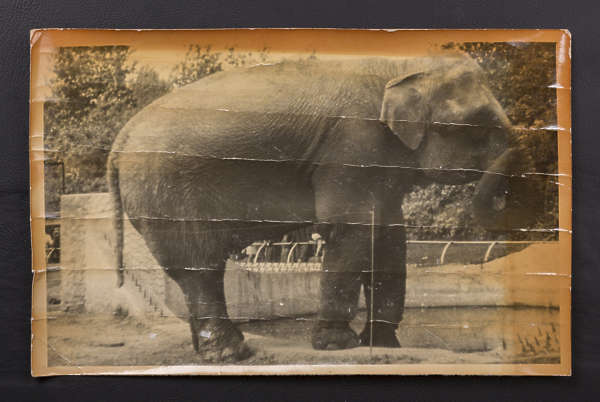 photo paper photograph picture elephant