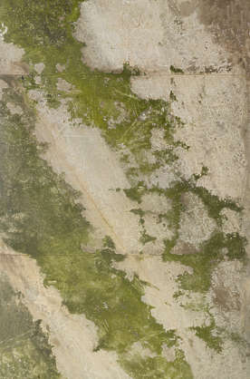 UK ceiling concrete mossy
