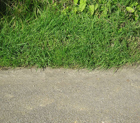 grass short edge border tarmac dirt road