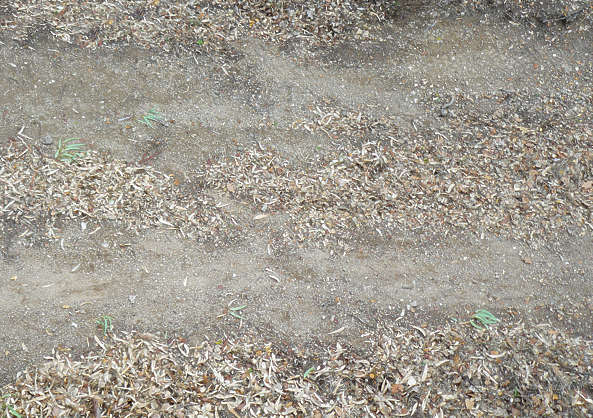 path road pebbles sand leaves dirt