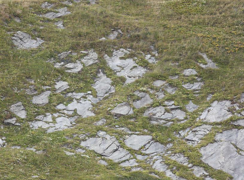 Rockgrassy0105 Free Background Texture Rock Rocks