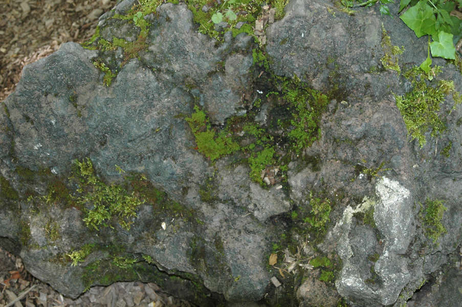 Rockmossy0001 Free Background Texture Stone Rock Mossy