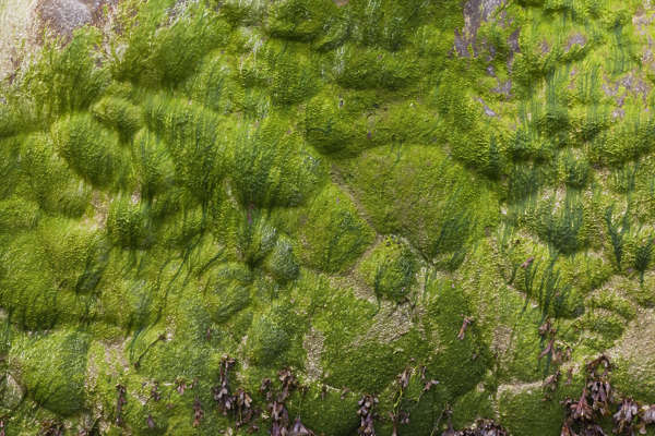 france normandy mossy moss algae