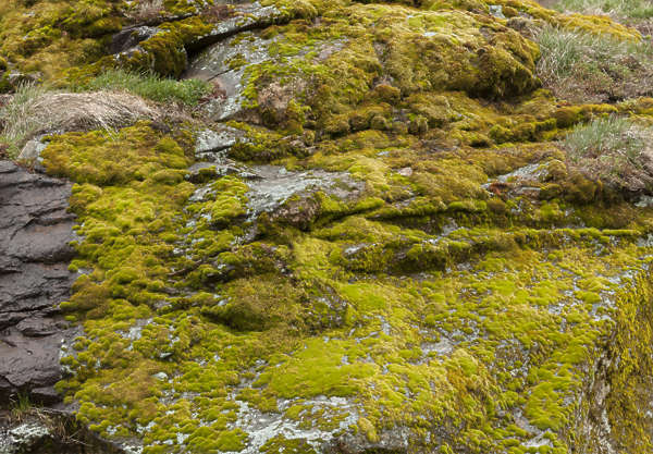 rock mossy spain