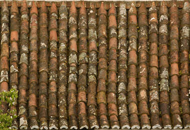 roof rooftiles roofing ceramic moss