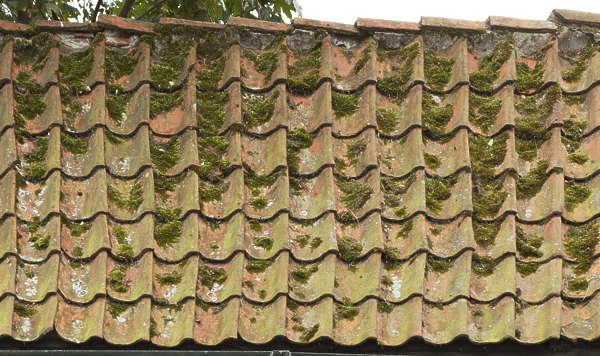 rooftiles roof roofing tiles mossy