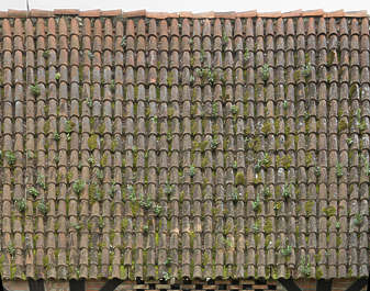 rooftiles ceramic mossy