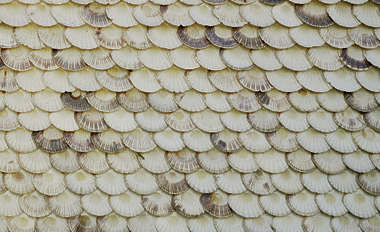 rooftiles shells shingles roof roofing
